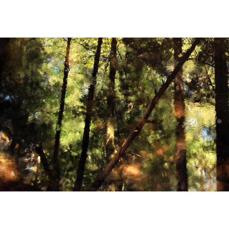 Photography | 12x15 | $75
