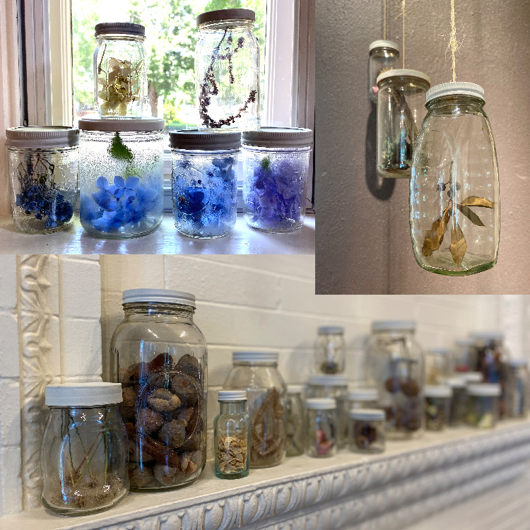 2020 | foraged plants from Florence, Alabama and environs, encased in glass jars with metal lids